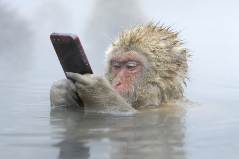 Snow monkeys Japan stolen phone