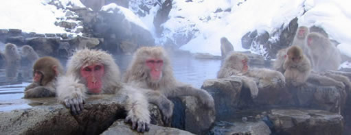 Myoko tours, Day tours Myoko, Snow Monkeys Japan